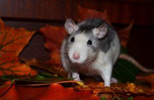 Pest Control Tips For Winter
