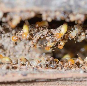 Termite treatments and regular inspections protect your home.